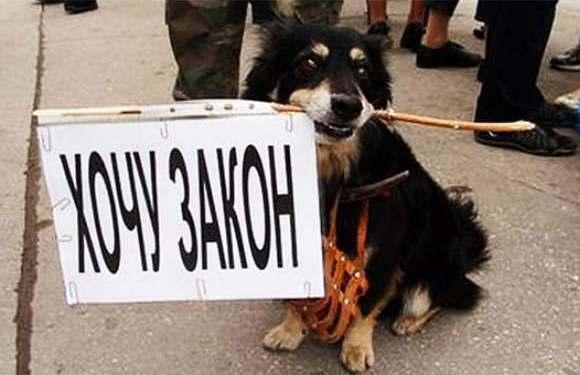 Ответственность за негуманное обращение с животными