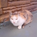 Бездомная кошечка ищет хозяев