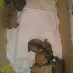 SOS! 7 новорожденных щенков!