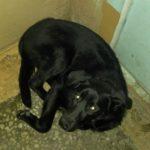 СРОЧНО нужен дом доброй, милой собаке!!!