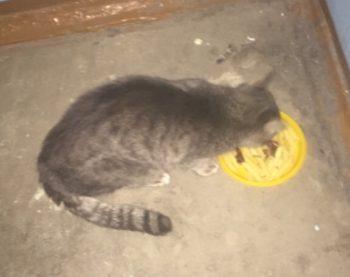 Бездомный котик ищет дом!