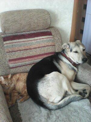 Пропала собака Грета, гарантируем денежное вознаграждение