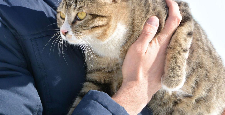 Ласковый и добрый котик ищет дом!