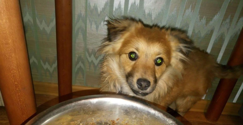 Найдена маленькая собачка