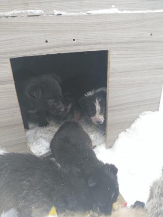 Замерзают на улице щенки