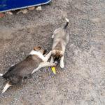 Приютите двух щеночков — девочки