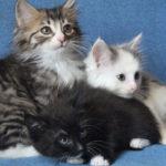 Красивые котята из коллектора