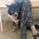 В подъезд прибился домашний пес-потеряшка