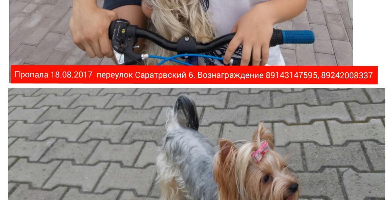 Потеряли собаку