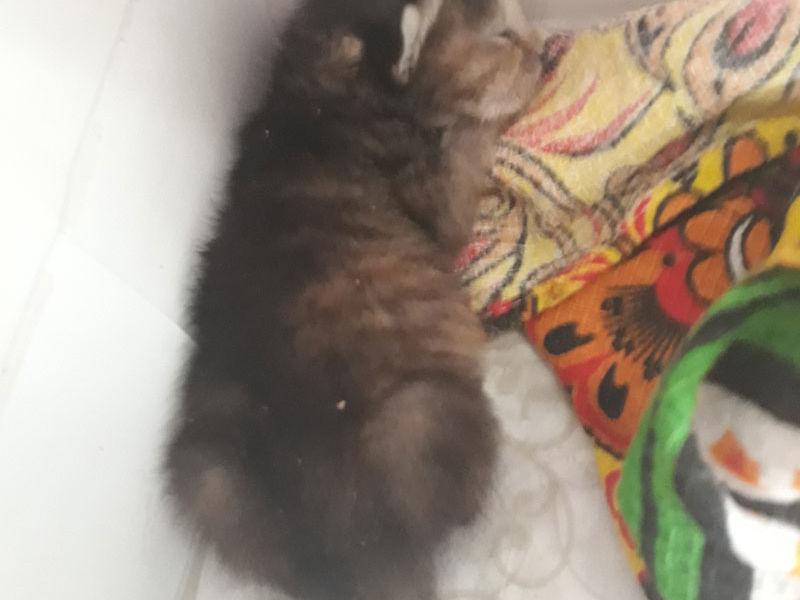 SOS! Нужна кормящая кошка!