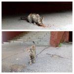 Ищу хозяев для кошечки