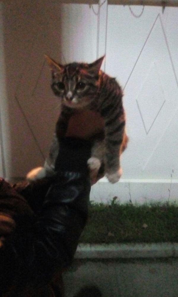 Ищем хозяина для маленькой кошечки!