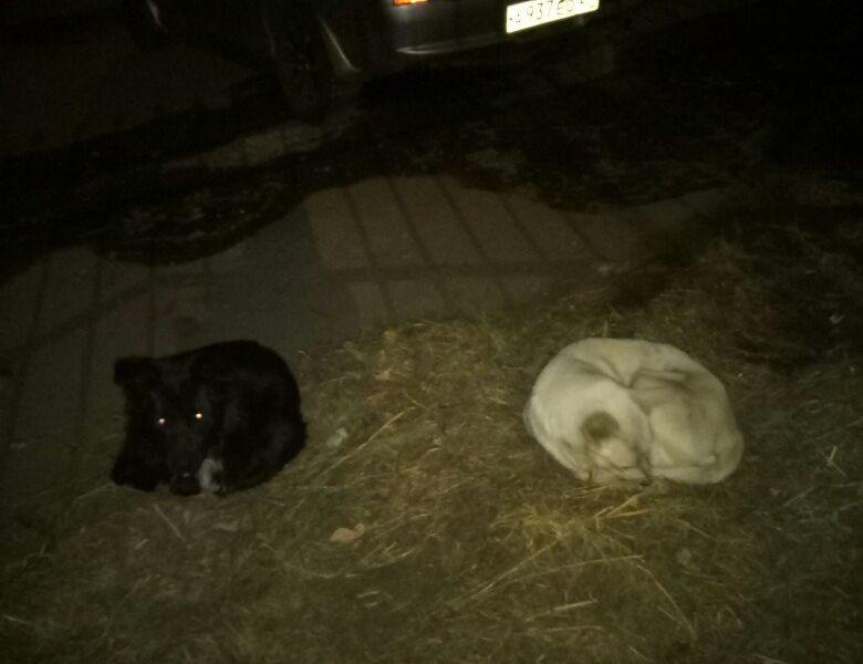 2 бездомные собаки мерзнут и голодают на одной из улицы Хабаровска
