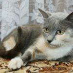 Кошка срочно ищет дом!
