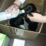 Нужна срочная помощь беспомощным щенкам!!!