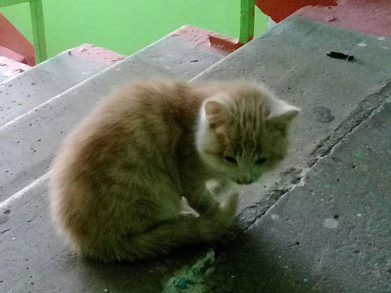 Котёнок ждёт помощи!