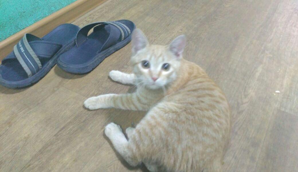 Кот с больными ножками ищет дом или передержку
