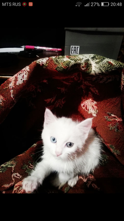 Котенок от живодеров