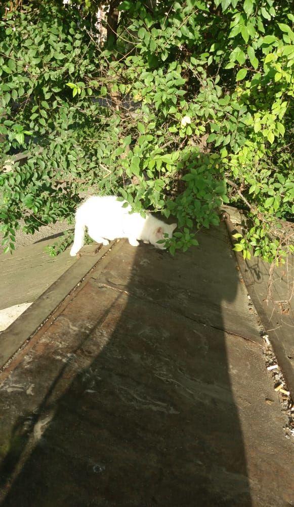 Слепому котенку нужна помощь!