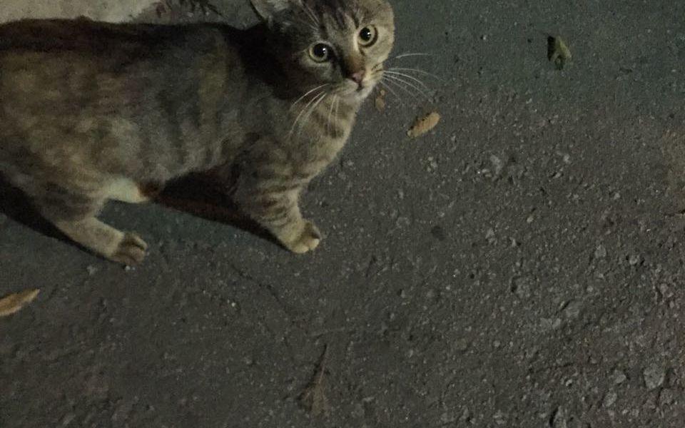 Кошка ищет дом!