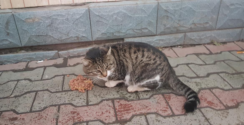 Нужна помощь коту!