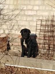 Найден щенок