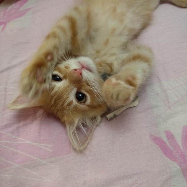 Найден подброшенный котёнок