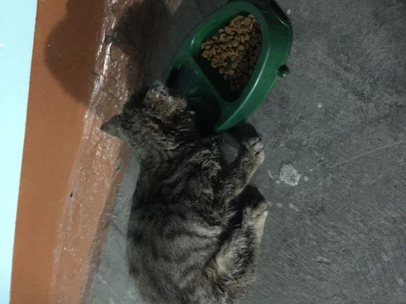 Котенок ищет дом!