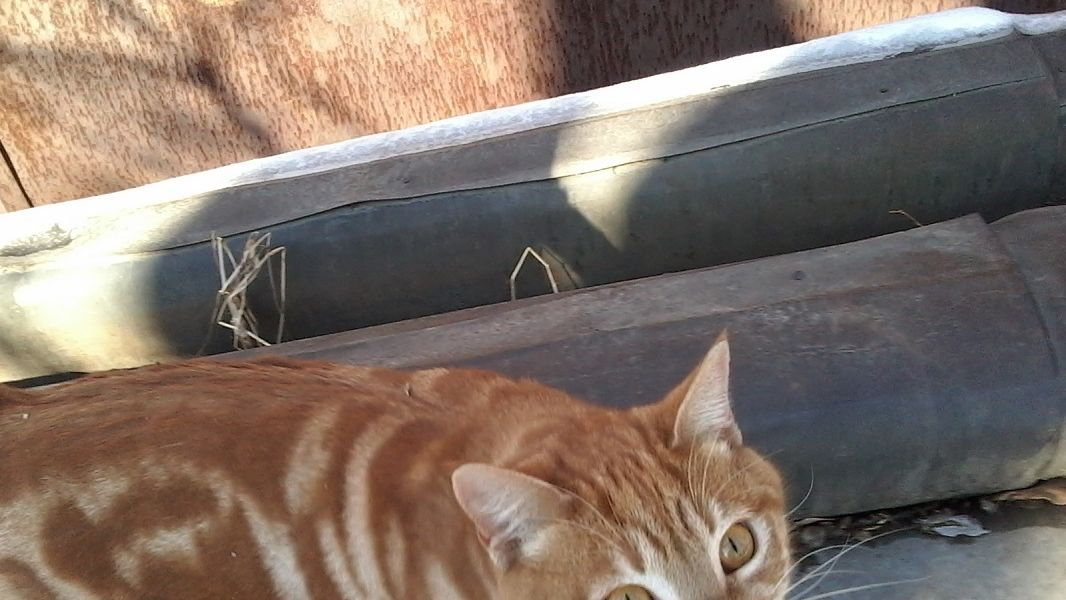 Кот в беде!
