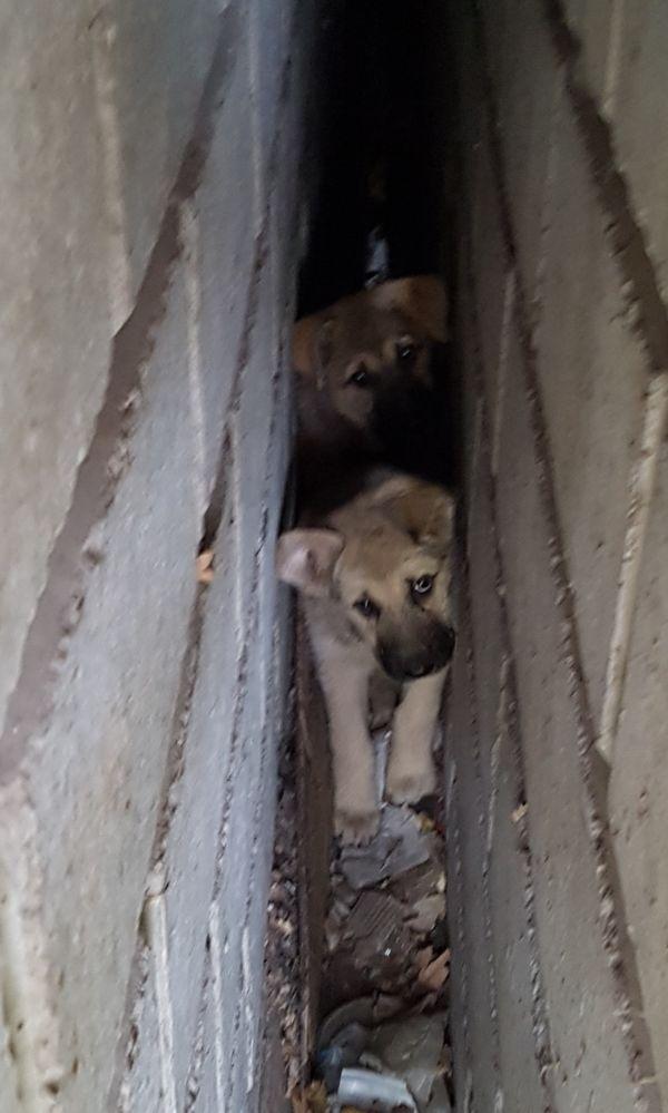 Нужна помощь для двух щенков