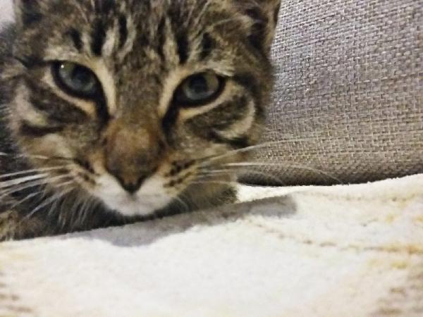 Котёнок Кузя ищет дом!