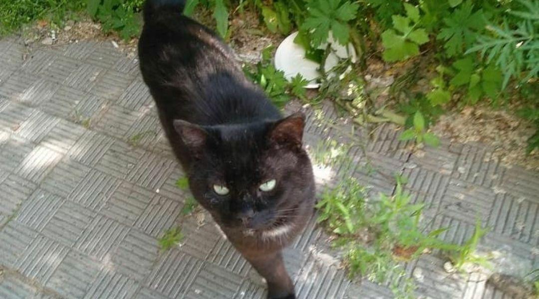 Ищет доброго хозяина или платную передержку котик Мартин