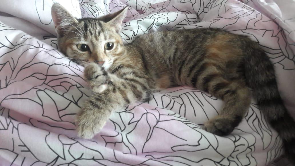 Отдаем в добрые руки кошку