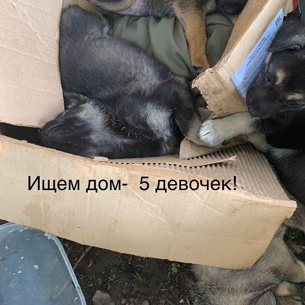 Щенки ищут дом