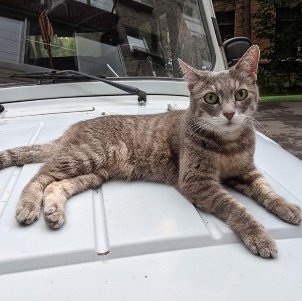 Найдена кошка