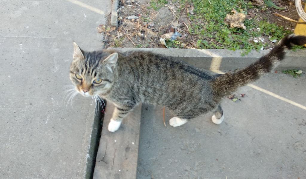 Кошка ищет хозяина