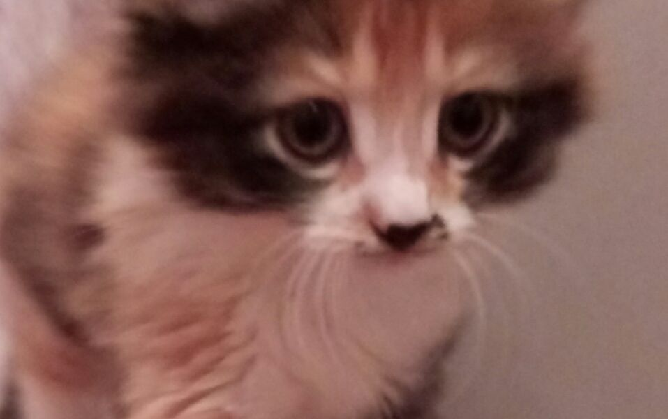 Котенок ищет хозяев