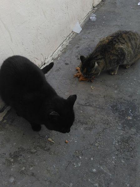 Пожалуйста, помогите спасти котиков!