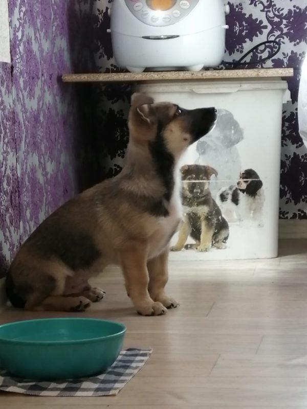 Срочно ищет дом щенок Борис
