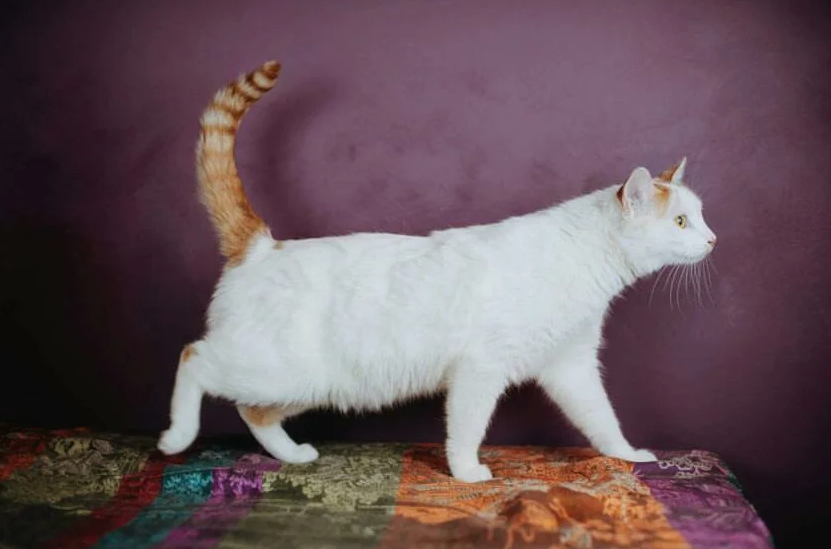 Кот ищет хозяина