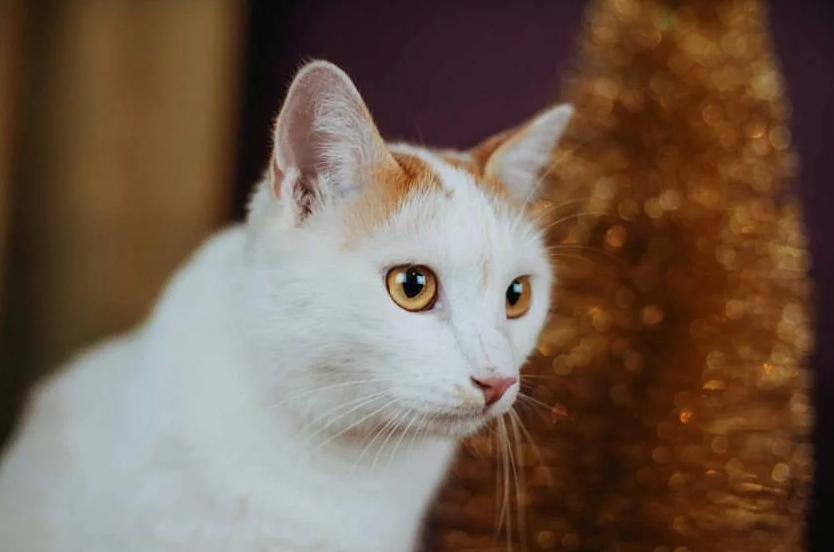 кот в добрые руки хабаровск