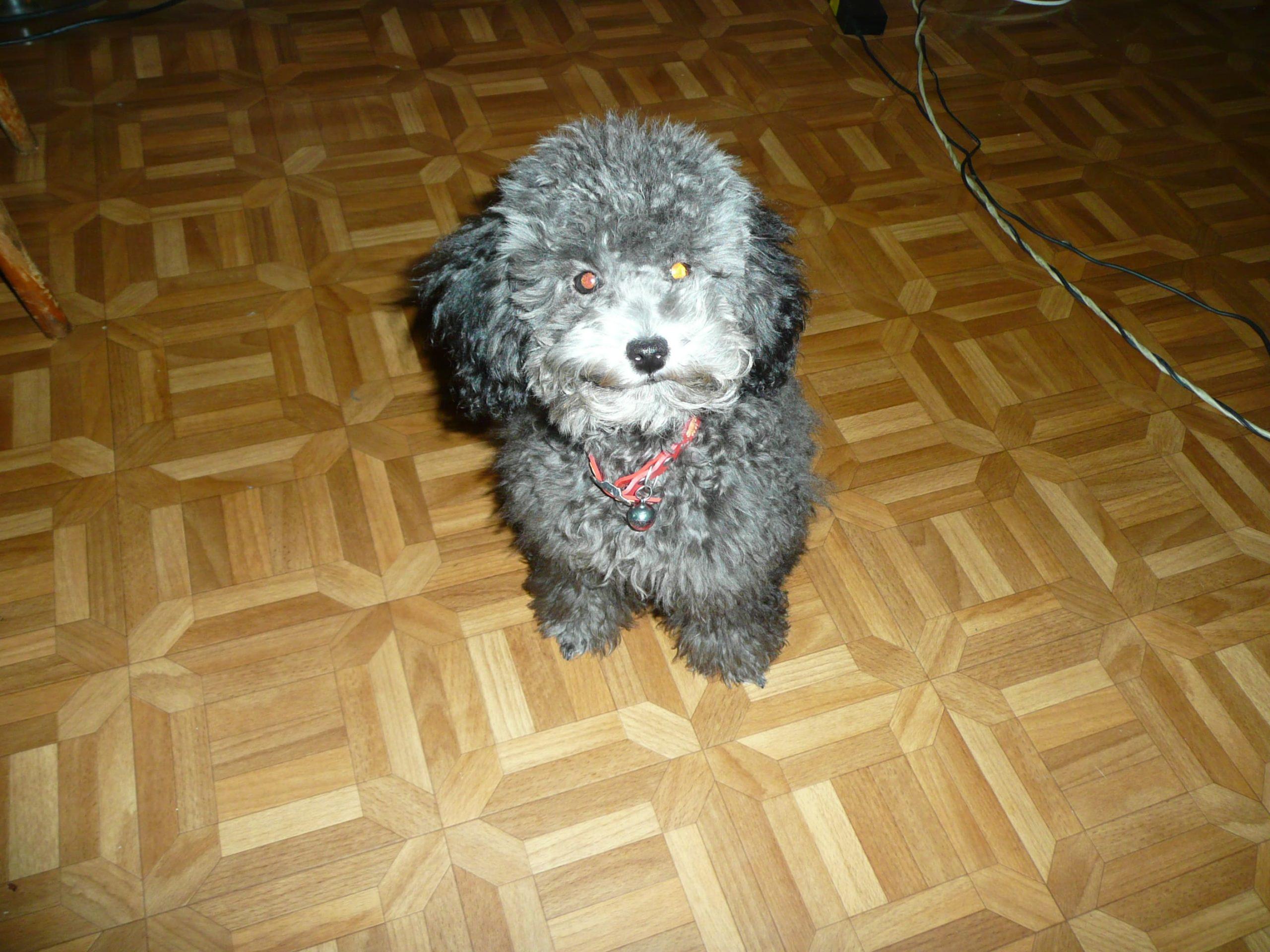 потерялась собака хабаровск