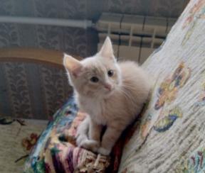 Чудесный персиковый котенок ищет добрых хозяев.