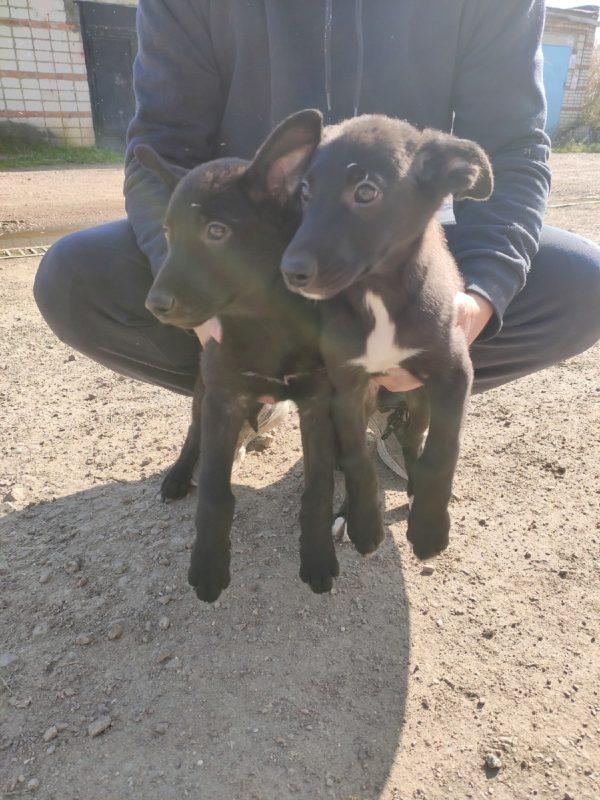 Милые, добрые щенки ищут любящие семьи!!!