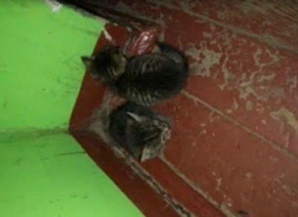 Подкинули в подъезд трёх котят