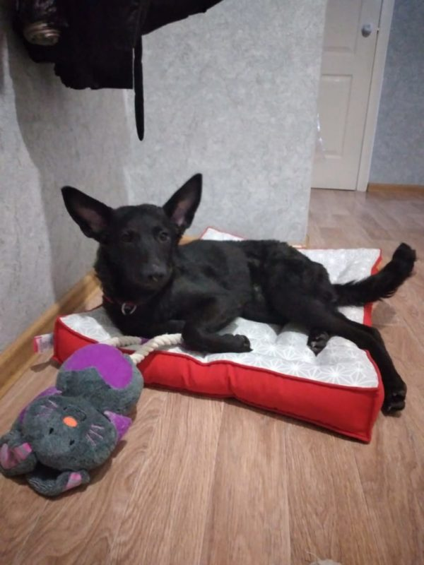 Найдена собачка