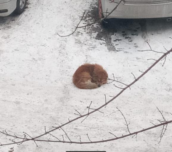 Найден пёс