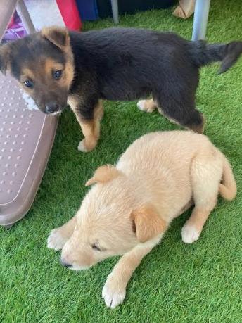 Отдам двух щенков