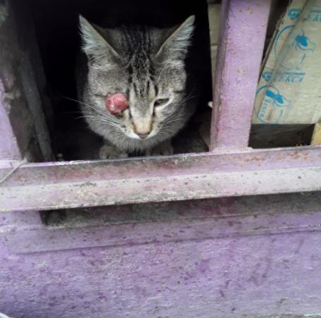 Нужна помощь в лечении бездомного котика