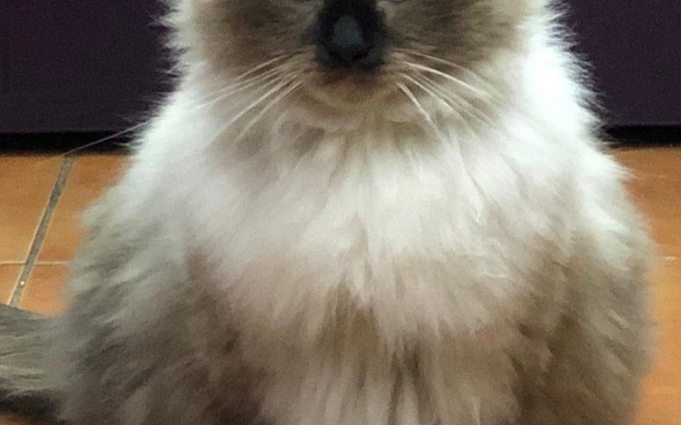 Пожалуйста помогите найти кота